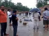 tiger-cub-death-in-madhya-pradesh-1623999810.jpg